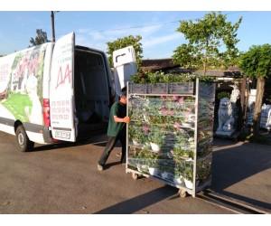 Новые поступления в садовый центр Дача