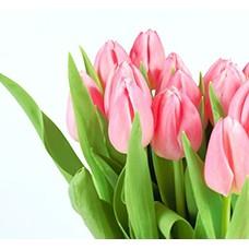 Тюльпаны (0)