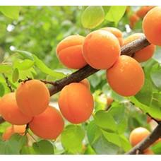 Плодовые деревья и кустарники (0)