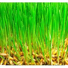 Семена газонных трав (5)