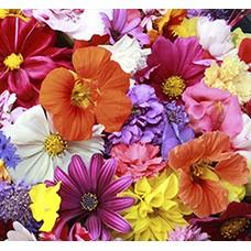 Семена цветов (4)